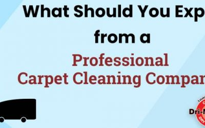 What Should You Expect from a Professional Carpet Cleaning Company?